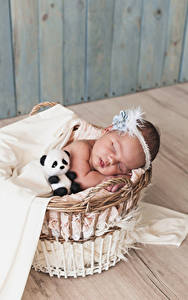 Фото Плюшевый мишка Корзина Грудной ребёнок Спящий