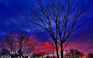 Картинки Деревья Силуэты Ветка Природа