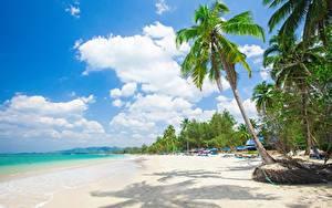 Фотографии Тропики Пляж Пальмы Деревья