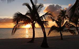 Фотография Тропики Рассветы и закаты Берег Пальмы Bahamas