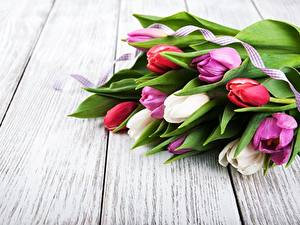 Обои Тюльпан Букеты Доски Цветы