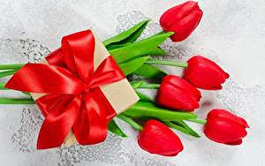 Фото Тюльпан Бантик Подарки Цветы