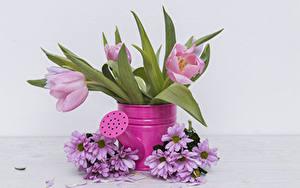 Фотография Тюльпаны Хризантемы Розовые Цветы