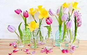 Фото Тюльпаны Нарциссы Лепестков Банка Цветы
