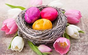 Картинка Тюльпаны Пасха Гнезде Яйцами Цветы