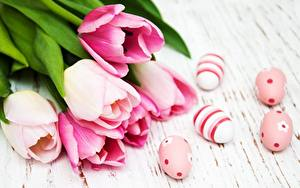 Обои для рабочего стола Тюльпаны Пасха Розовых Яйца цветок