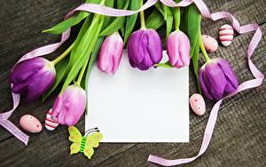 Картинки Тюльпаны Пасха Фиолетовый Ленточка Шаблон поздравительной открытки цветок