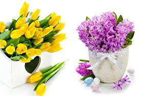 Обои Тюльпаны Гиацинты Белый фон Ваза Яйца Цветы