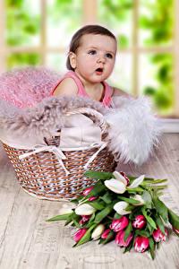 Картинка Тюльпаны Младенцы Корзина Взгляд ребёнок