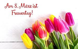 Фотографии Тюльпан Международный женский день Немецкий цветок