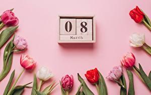 Картинка Тюльпан Международный женский день Розовая Цветной фон Календаря цветок