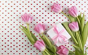 Фотография Тюльпаны Розовый Подарки Цветы