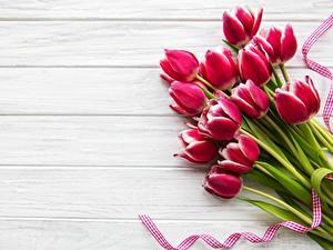 Фотографии Тюльпаны Красный Шаблон поздравительной открытки Доски цветок