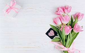 Фото Тюльпан День всех влюблённых Розовый Шаблон поздравительной открытки Сердечко цветок