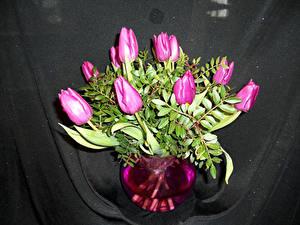 Фотография Тюльпаны Вазы Цветы