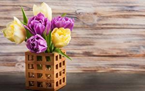 Фотографии Тюльпан Вазе цветок