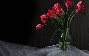 Картинка Тюльпан Вазе Красная цветок