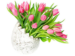 Картинка Тюльпаны Белый фон Ваза Розовые Цветы