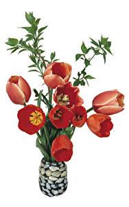 Картинки Тюльпан Белым фоном Ваза Красные цветок