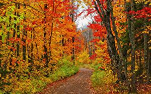 Обои для рабочего стола США Осень Леса Листья Дерева Тропы Minnesota Природа