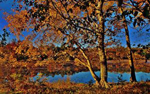 Обои Штаты Осенние Озеро Дерева Maryland Cash Lake Природа