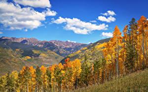Обои США Осенние Гора Пейзаж Небо Деревья Облачно Colorado Природа