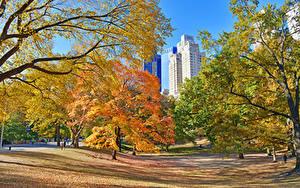 Фотографии США Осень Парк Нью-Йорк Деревья Лист Central Park Природа