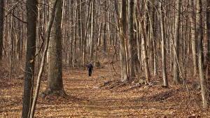 Фотография США Леса Осень Тропа Листья Идет Appalachian Mountains, Virginia Природа