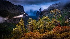 Фотография США Лес Гора Калифорния Дерево Йосемити Sierra Nevada