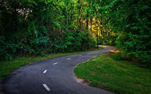 Фотографии Америка Леса Дороги Траве Columbus Georgia Природа