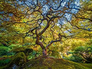 Картинка США Сады Парки Деревья Ветки Portland Japanese Garden Природа