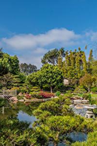Фотографии Штаты Сады Пруд Дерево Кустов Earl Burns Miller Japanese Garden Long Beach Природа