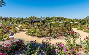 Фотография США Сады Роза Калифорния Дизайна Кусты South Coast Botanic Garden Природа