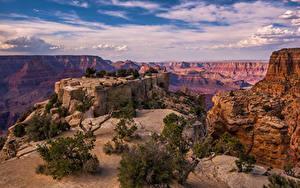 Фото Америка Гранд-Каньон парк Парки Скалы Деревья Каньоны Облако Arizona