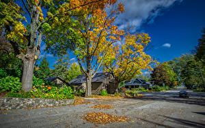Фотографии Штаты Здания Дороги Осенние Улица Деревья Листва Northport Michigan Города