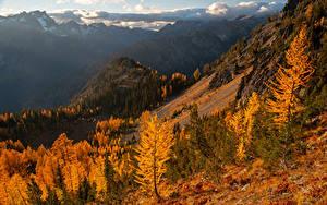 Фото Штаты Горы Осенние Деревья Carne Mountain Природа