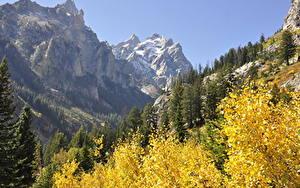 Картинки США Гора Осенние Лес Парки Скала Grand Teton National Park, Wyoming Природа