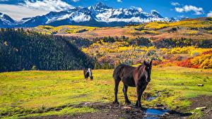 Фотографии Штаты Горы Осенние Лошади Wilson Peak, Colorado Животные