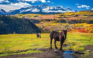 Фотографии Штаты Горы Осенние Лошади Wilson Peak, Colorado Природа Животные