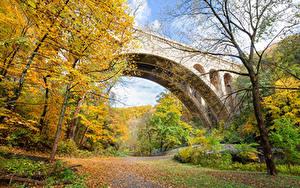 Фотография Штаты Парки Осень Мост Дерево Листья Wissahickon Valley Park