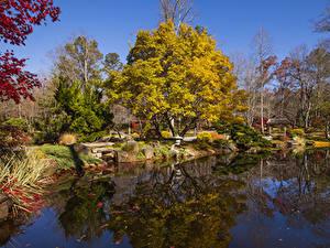 Фотографии США Парки Осенние Пруд Деревья Gibbs Gardens Природа