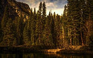 Картинка Штаты Парки Леса Берег Йосемити Ель Природа
