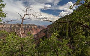 Фото США Парки Гранд-Каньон парк Скала Деревьев Arizona Природа