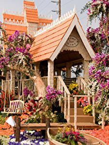 Фотографии Штаты Парки Здания Розы Орхидеи Антуриум Калифорния Дизайн Pasadena Города