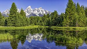 Фото Штаты Парки Озеро Горы Леса Ель Grand Teton National Park