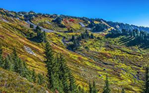 Фото Штаты Парк Вашингтон Ель Mount Rainier National Park Природа