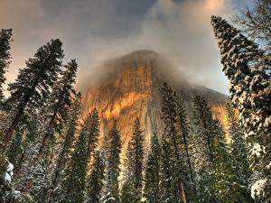Фото Штаты Парки Горы Зима Йосемити Калифорния Ели Природа