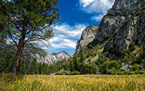 Фотография США Парки Горы Дерево Траве Облачно Скала Sequoia and Kings National Park Природа