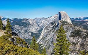 Фото США Парк Горы Калифорния Йосемити Мох Ель Природа