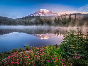 Фотографии США Парки Гора Озеро Отражении Mount Rainier National Park